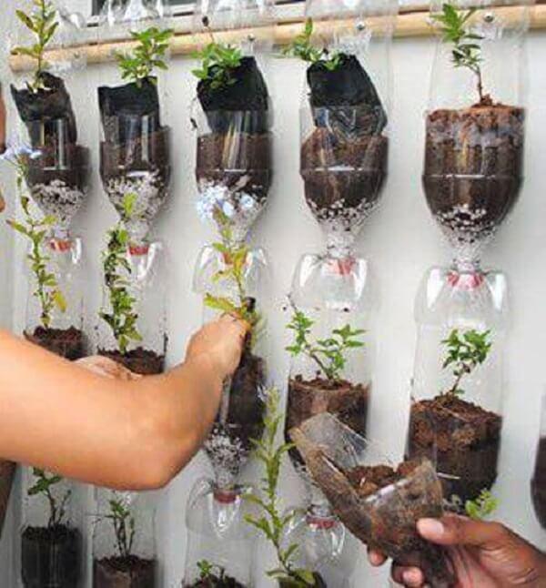 Jardim vertical com os vasos de garrafas pet interligados na parede
