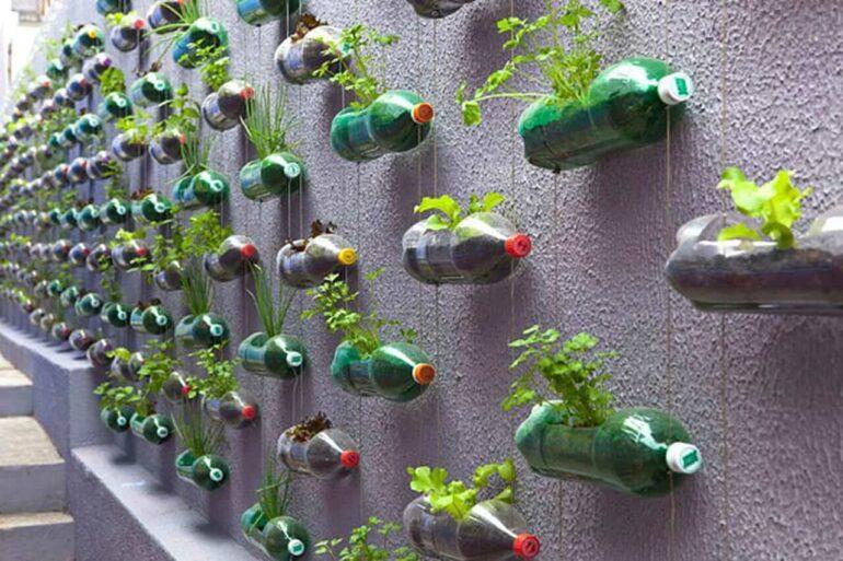 Todo o muro foi preenchido com horta com garrafa PET