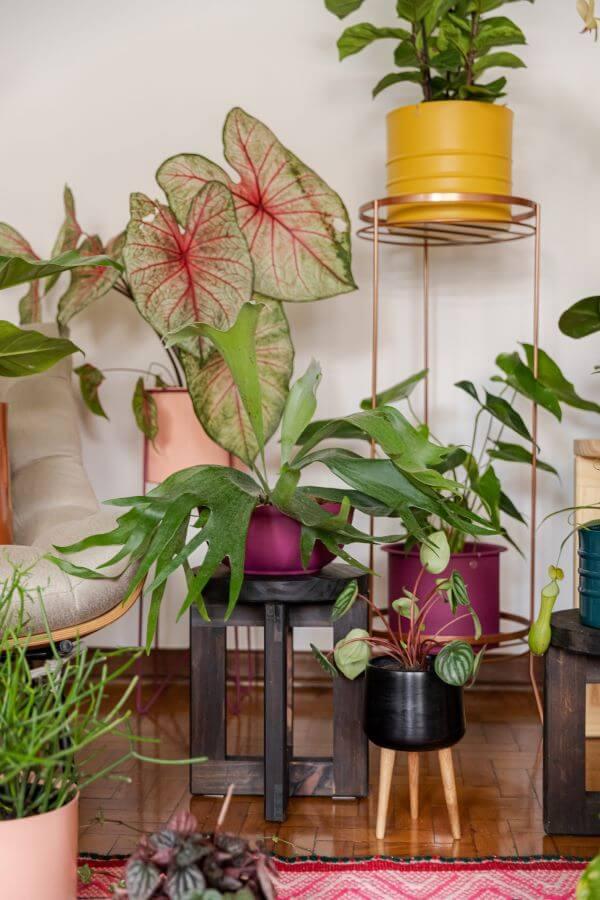 Casa decorada com plantas e caladium