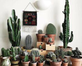 Conheça e cultive plantas que protegem sua casa e atraem boas energias