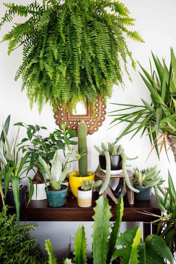 Decore, traga frescor e cultive plantas que protegem sua casa