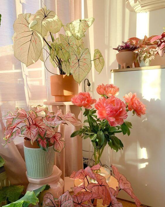 Flores e plantas cor de rosa para decoração
