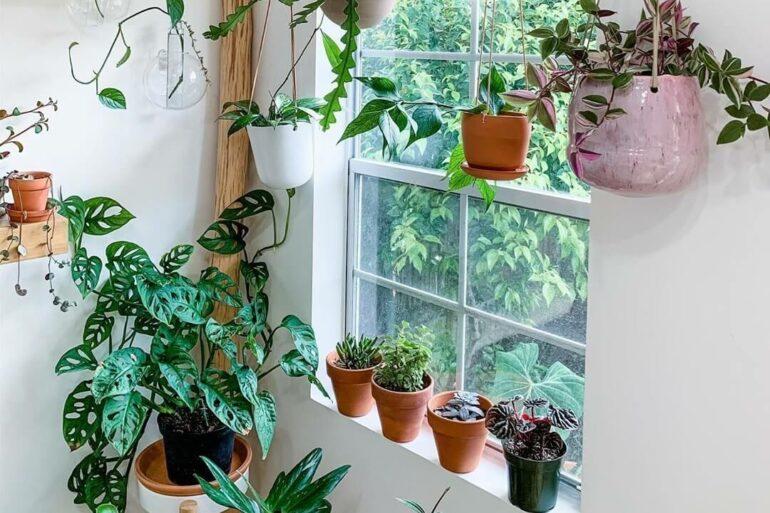 Nunca é demais trazer mais plantas para a decoração da janela. Fonte: ApkGK