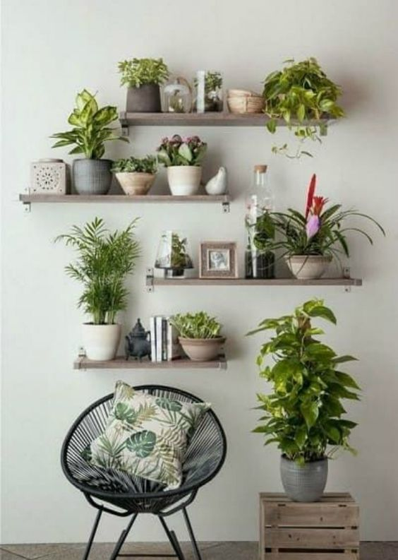 Prateleira rustica para plantas