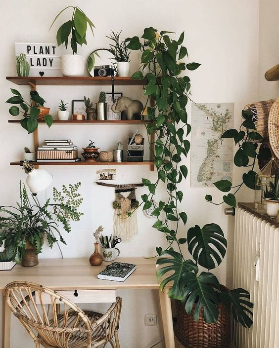 Prateleira rustica para plantas no escritorio