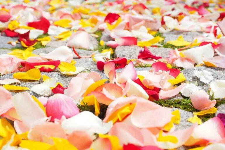 Saiba como decorar com pétalas de flores. Fonte: Pixabay