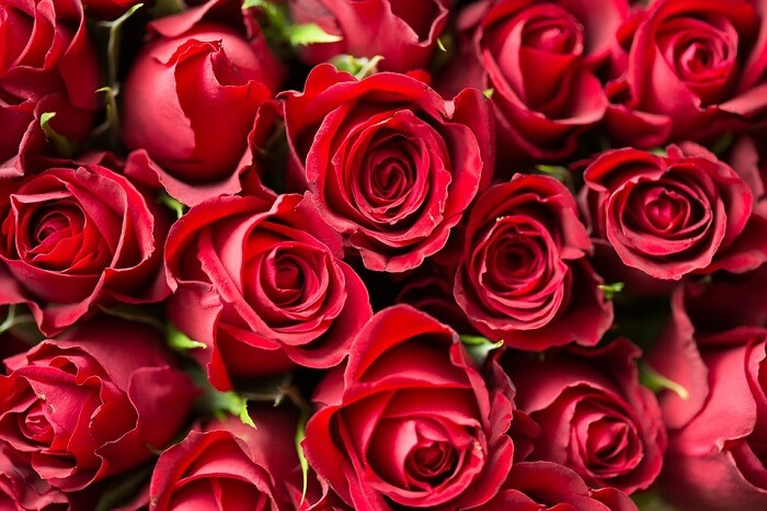 Utilize as pétalas de flores de rosas vermelhas para decorar a mesa de um jantar romântico. Fonte: Pixabay