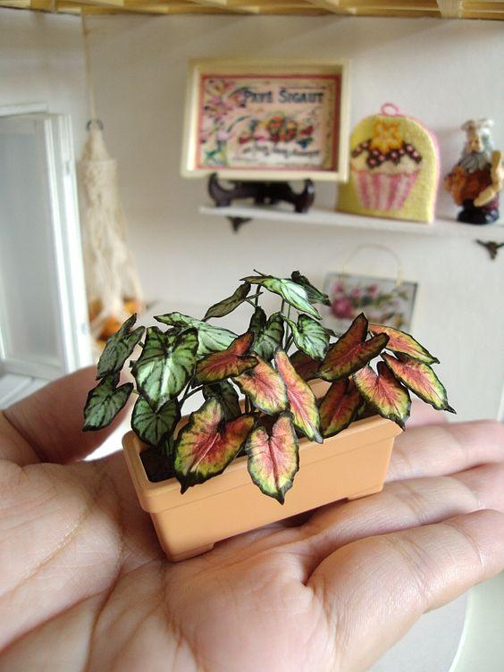 Vaso mini Caladium