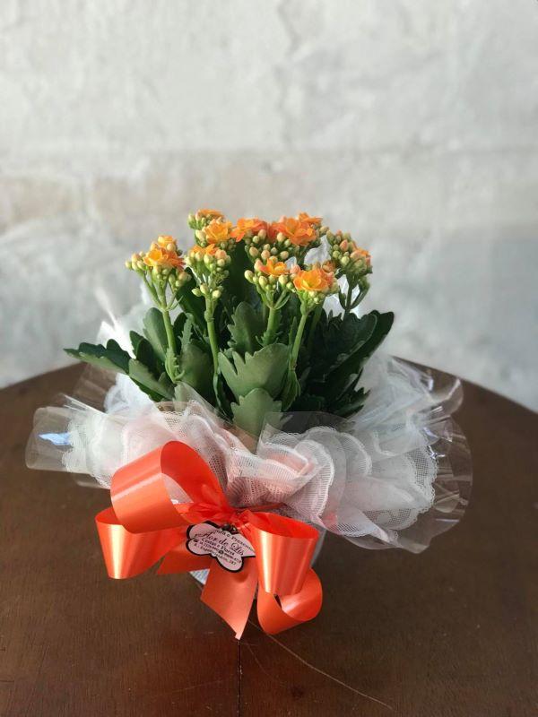 Calandiva laranja como presente especial