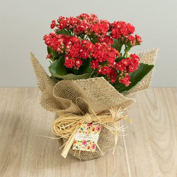 Mini calandiva vermelha com vaso decorado com juta