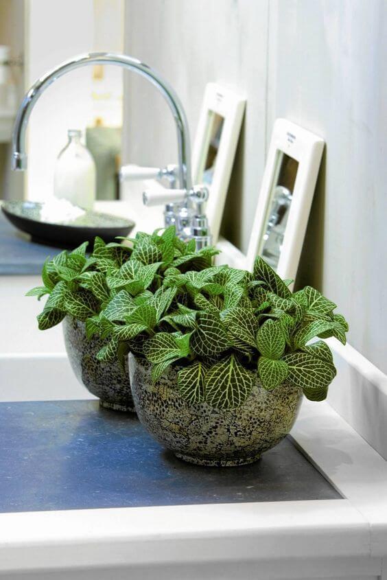 Cozinha com fitônia e vaso de ceramica