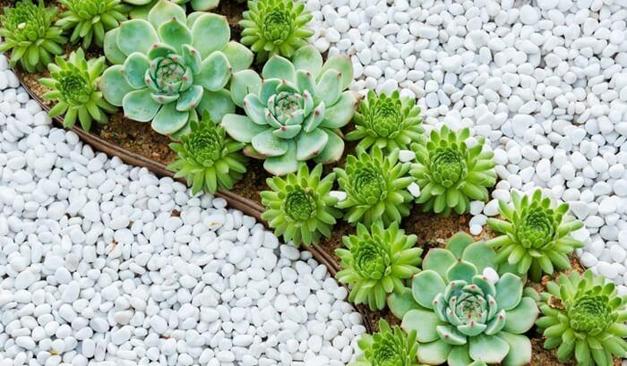 Lindo jardim com pedras e suculentas. Fonte: Pinterest