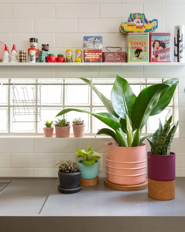 Vasos de plantas com fitônia pequena