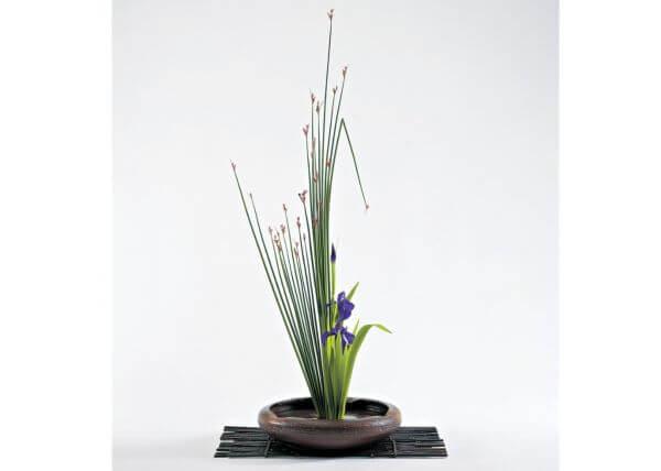 Arte ikebana com flores lindas