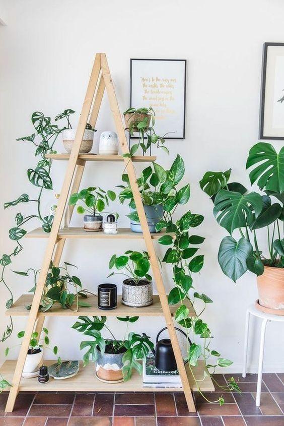 Jardim com estante enfeitada com plantas