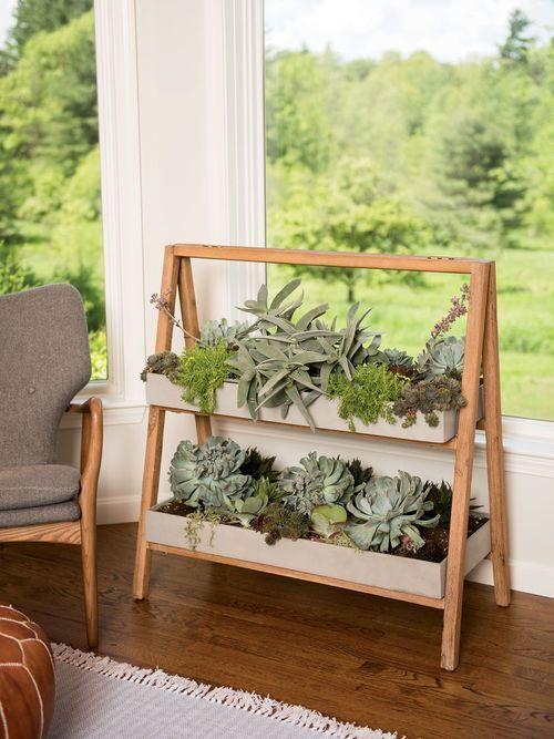 Jardim de suculentas para estante cavalete