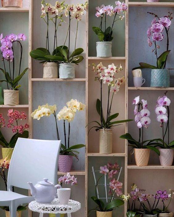 Enfeites para estante com orquídeas