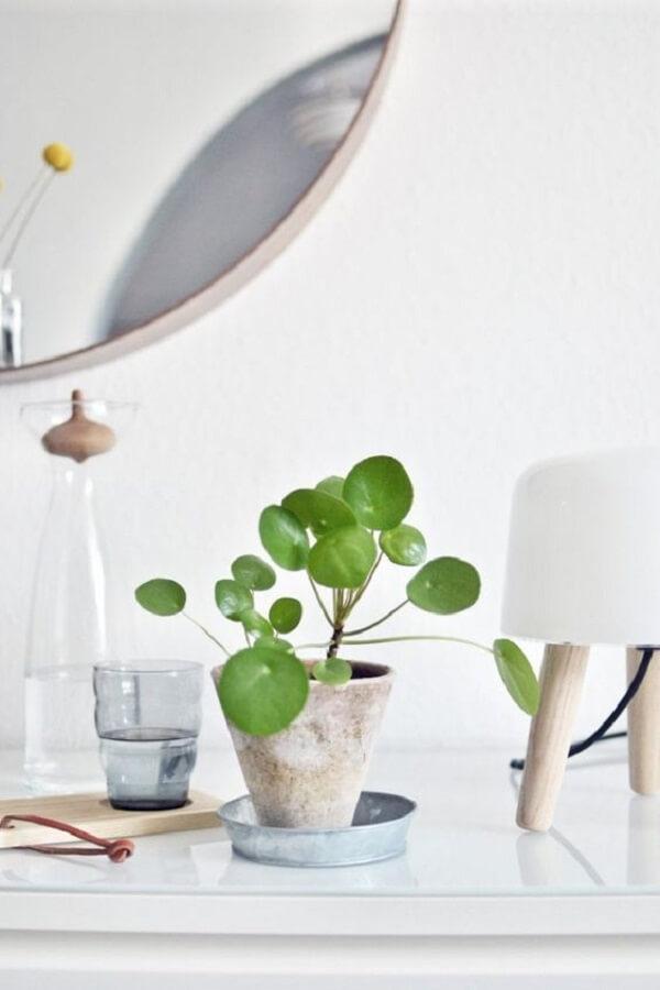 A Pilea peperomioides é ótima para ser cultivada dentro de casa. Fonte: Pinterest