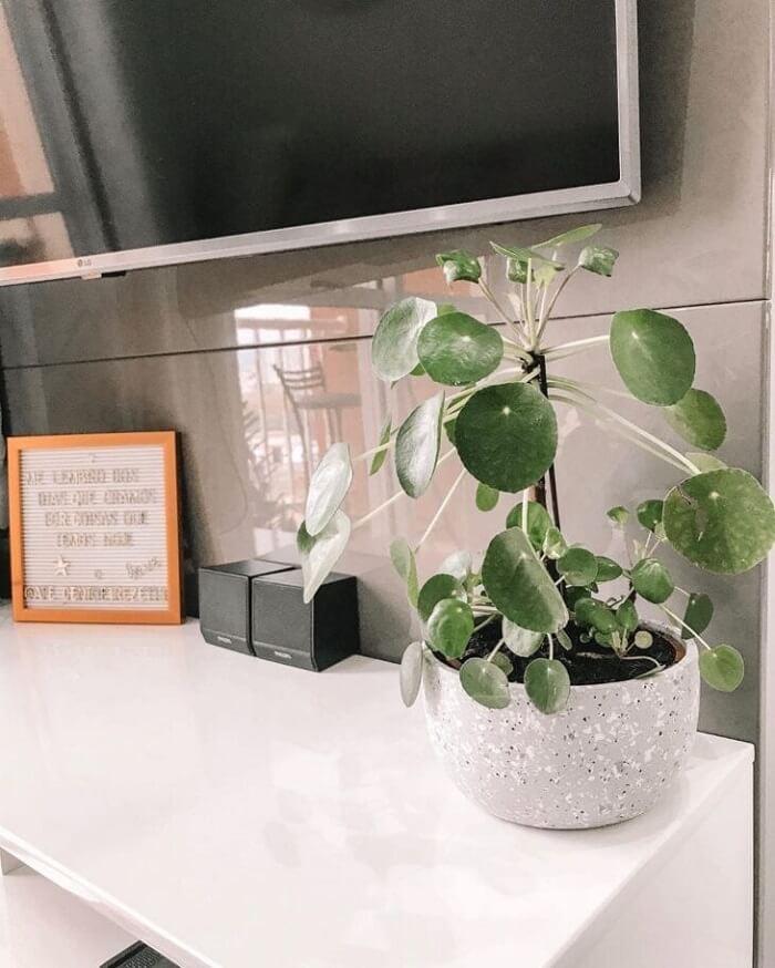 A Pilea traz um toque de verde para a decoração da sala de estar. Fonte: Home Apê 113