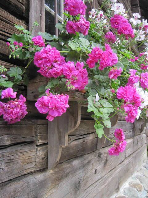 Floreira de madeira com geranio cor de rosa