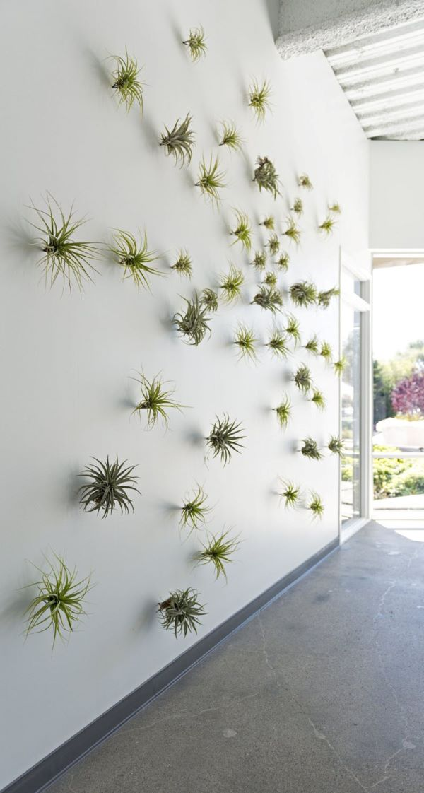 Parede decorada com plantas aéreas