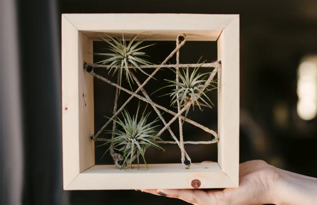 Quadro com planta aerea na decoração criativa