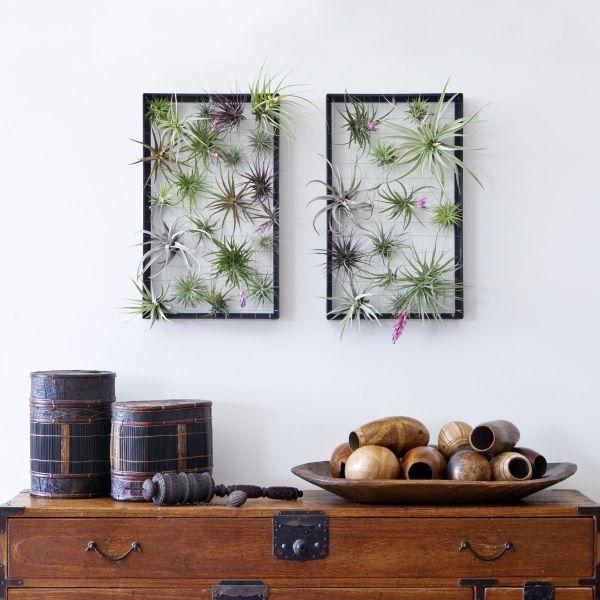 Sala decorada com plantas aéreas na parede