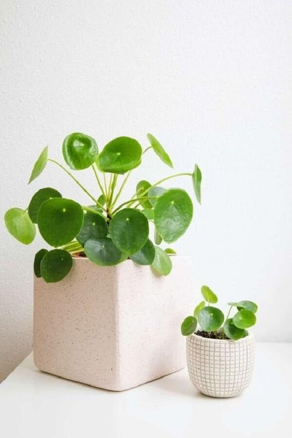 Utilize diferentes cachepôs para expor sua planta Pilea. Fonte: Pinterest