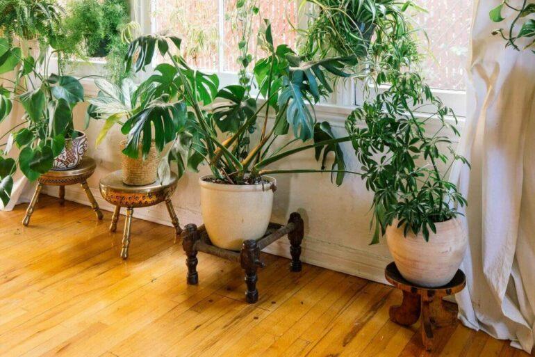 Aprenda como trazer a natureza para dentro de casa. Fonte: Dabito