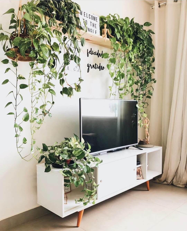 As plantas para dentro de casa trazem frescor, alegria e beleza. Fonte: Aurea Incorporadora