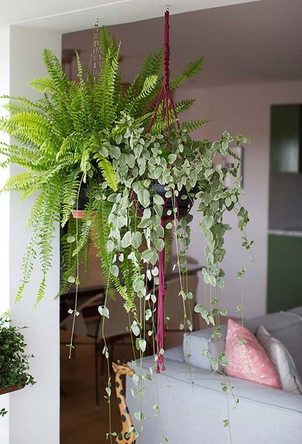 Decoração de sala com plantas pendentes Foto Revista Artesanato