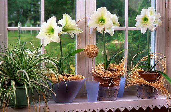 Vaso de amarílis branca na janela de casa iluminada