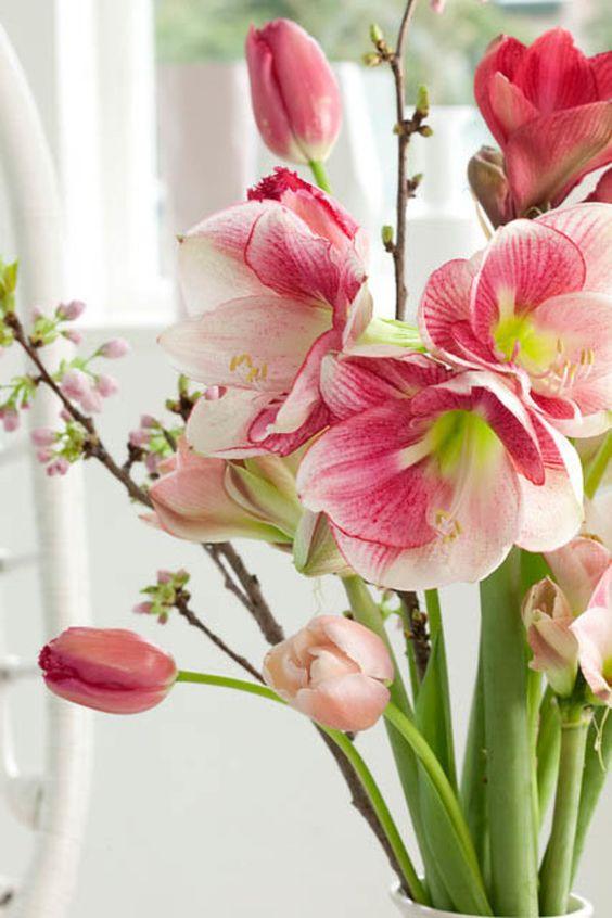 Vaso com flores amarílis e tulipas cor de rosa