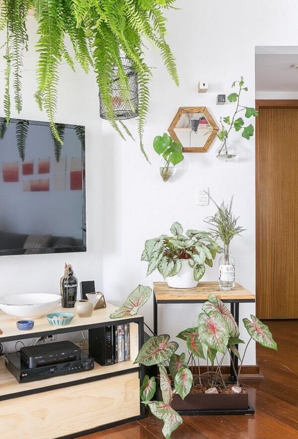 Vasos com plantas para decoração de sala simples com TV na parede Foto Gisele Rampazzo
